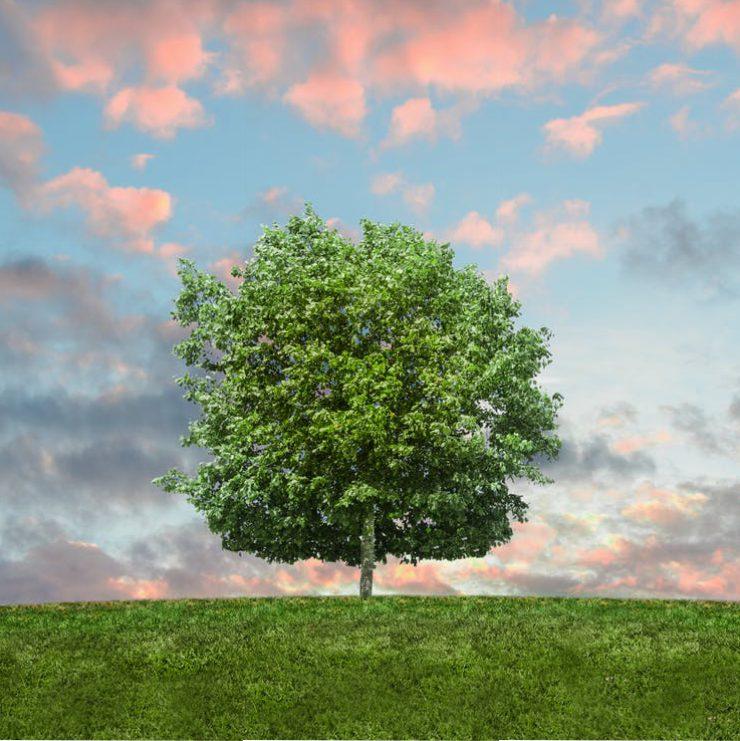 Das Rechtsprivileg als Steuerungsmittel im Umweltschutz?